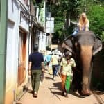 Elephant riding in Pinnawala