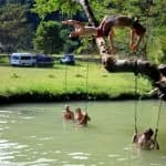 Blue Lagoon, jumping from the tree