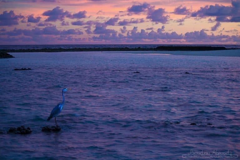 heron-sunset