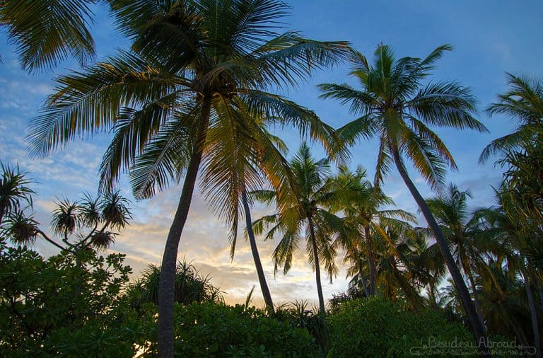 sunset-in-palmtrees