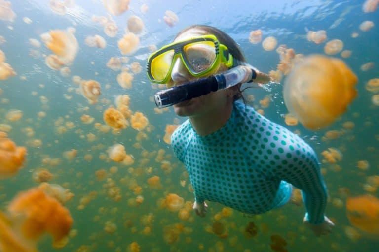 jellyfish in Palau