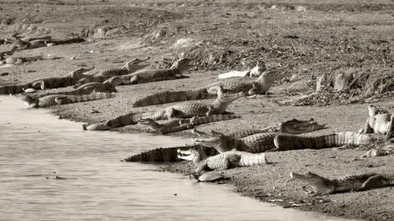 Incredible wildlife in Venezuela.
