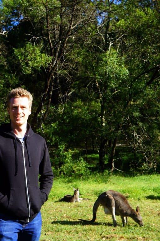 Kangaroo in Sydney