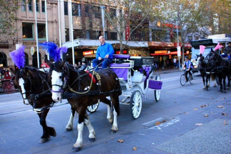Horse ride in Melbourne