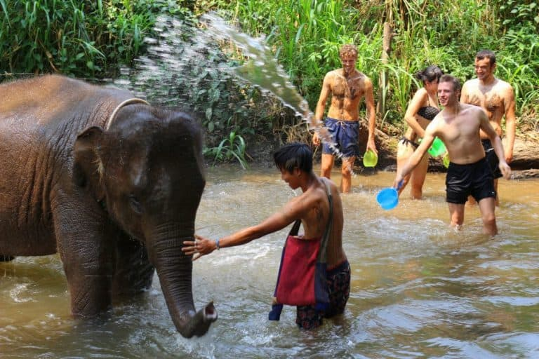 Bath with elephants in Chiang Mai