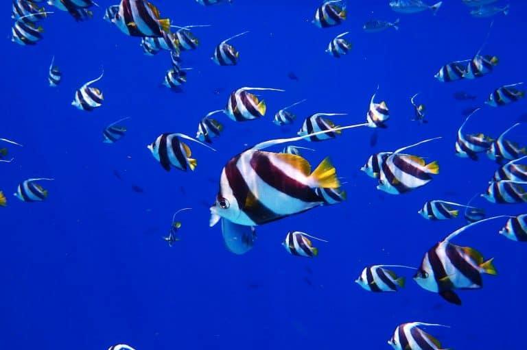 Fish Snorkelling