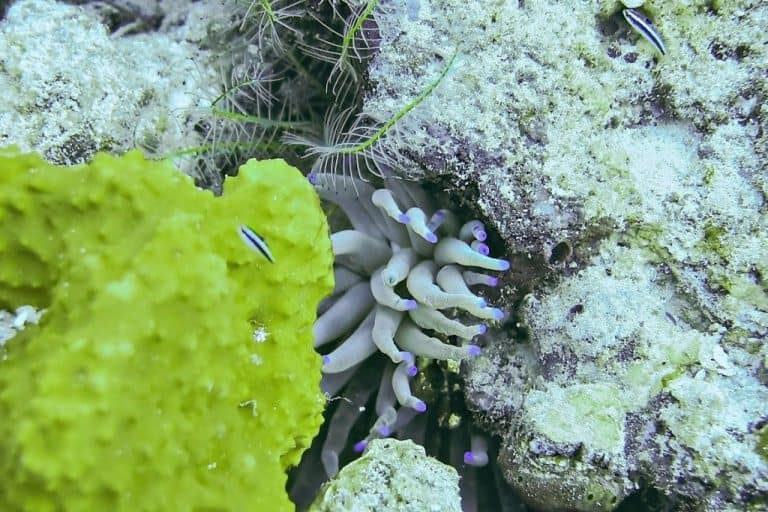 Sea Anemone 3