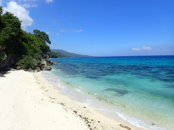 A beach with crystal clear water, visible underwater marine life and green trees.