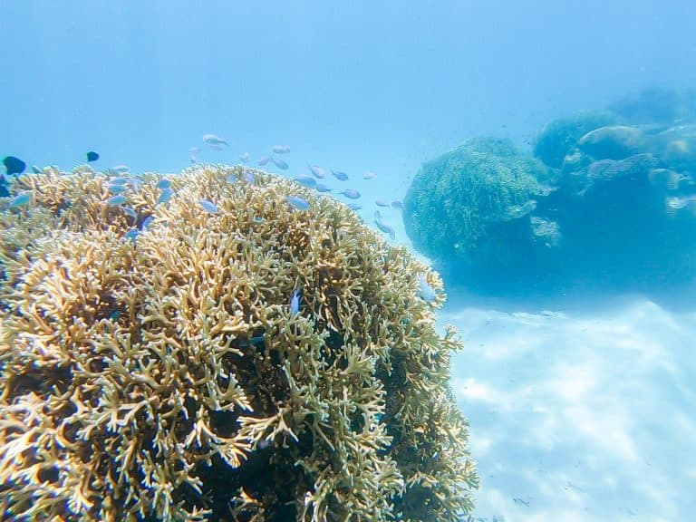 Scuba Diving in Fiji