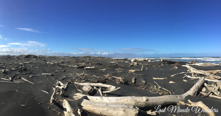 A large black sand beach which is littered with lots of driftwood.